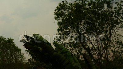 Bäume, die in den starken Wind des Regensturms in der Sommersaison beeinflussen stock video