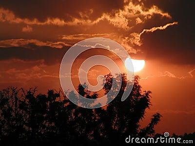 Bäume am Sonnenuntergang