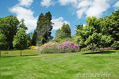 Bäume und Rasen an einem hellen Sommertag
