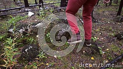 Bûcheron Walking sur la mousse verte dans la belle longueur d'Autumn Forest Lifestyle Slowmotion 4K La Carélie, Russie banque de vidéos