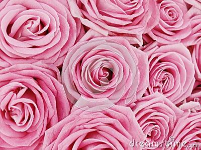 Bündel rosafarbene Rosen