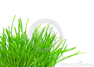 Büschel des grünen Grases