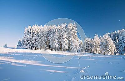 Błękitny półksiężyc pola lasowy nieba śnieg