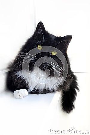 B/w cat