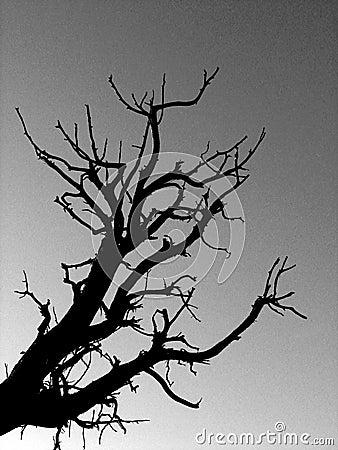B&W Tree Sillhouette