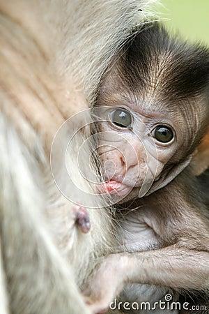 Free Baby Stock Photos - 6061703