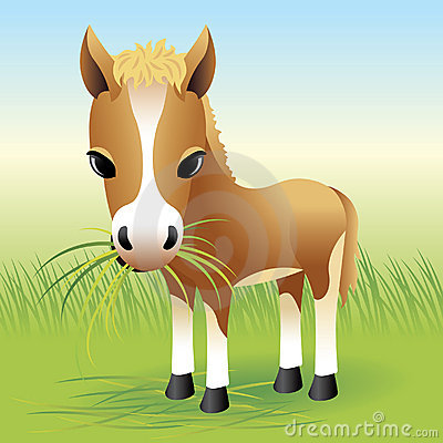 Free Baby Animal Collection: Horse Stock Images - 8305504