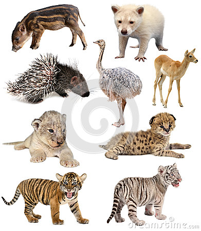 Free Baby Animals Collection Stock Photos - 50084333