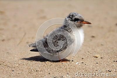 Pretty baby bird