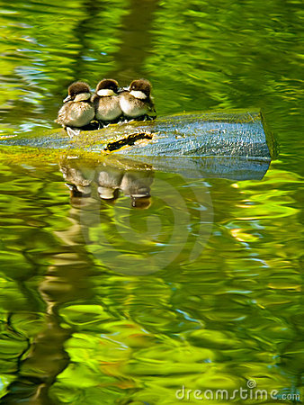 Free Baby Birds Royalty Free Stock Photo - 2721485