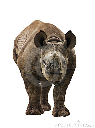 Free Baby Black Rhinoceros Stock Image - 18959771