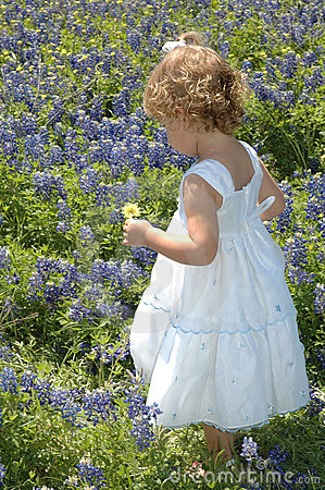 Free Baby Blue Bonnet Royalty Free Stock Images - 2280859