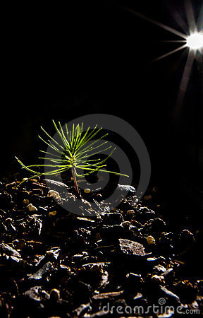 Baby Bonsai Tree black background and star light