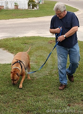 baby boomer walking dog