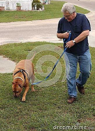 baby boomer walking dog