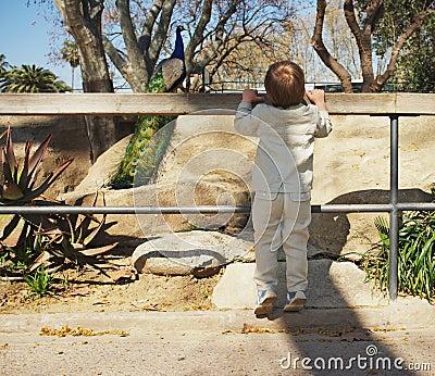 Baby boy in a zoo