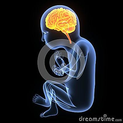 Free Baby Brain Development Royalty Free Stock Photography - 56141307