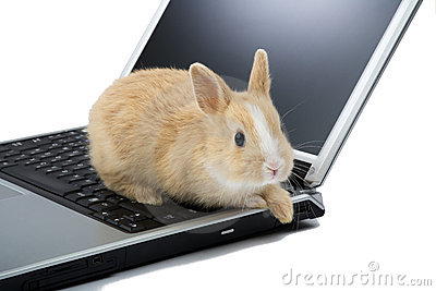 Baby bunny on the laptop, isolated