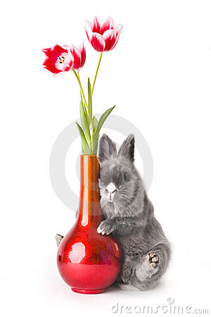 Free Baby Bunny With Tulips Royalty Free Stock Images - 2110109