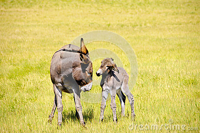 Baby Burro in Trouble