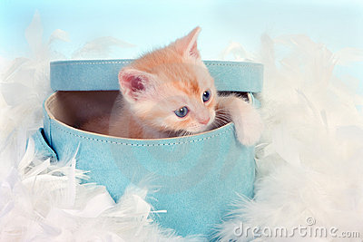 Baby cat in box