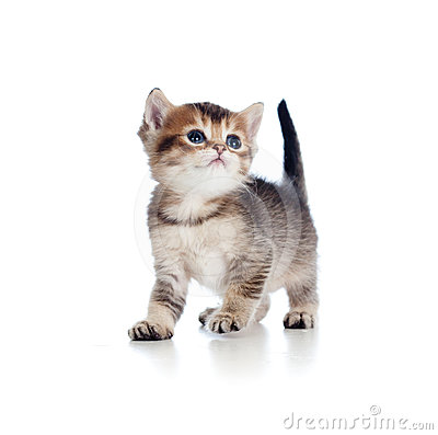 Baby Cat One Month Old Looking Upward Stock Photography