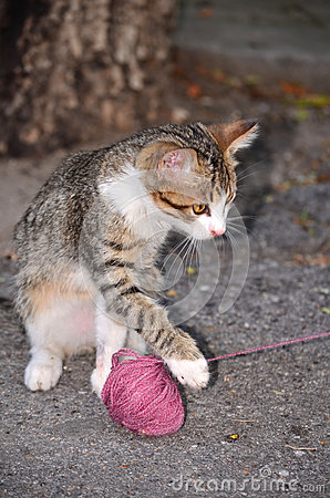 Baby cat playing with wool