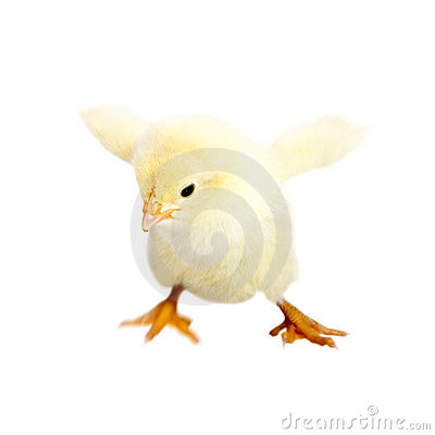 Free Baby Chicken Royalty Free Stock Image - 19552386