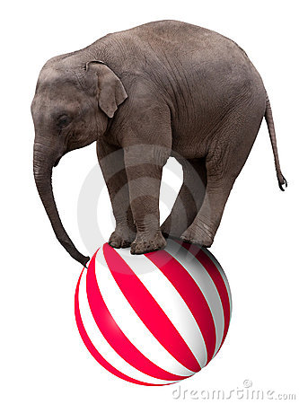 Baby circus elephant balancing on ball