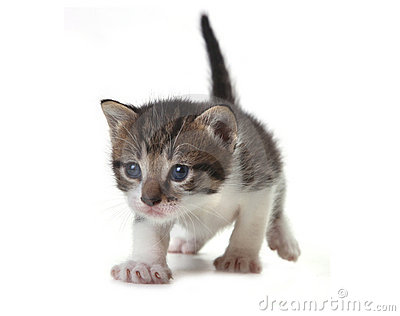 Baby Cute Kitten On A White Background Stock Photos - Image  21024403