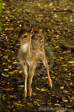 A baby deer on the grass