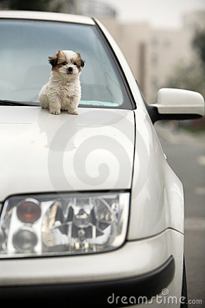 Baby dog and car