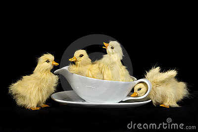Baby Ducks in Gravy Bowl