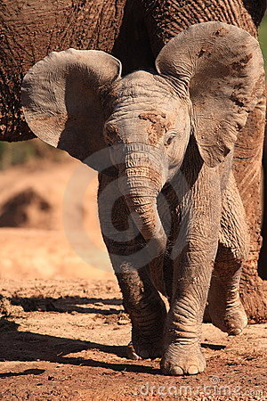 Free Baby Elephant Stock Photo - 2991270