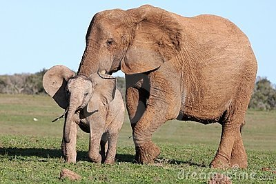 Baby Elephant Chasing Bird