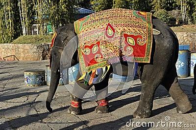Baby Elephant, China