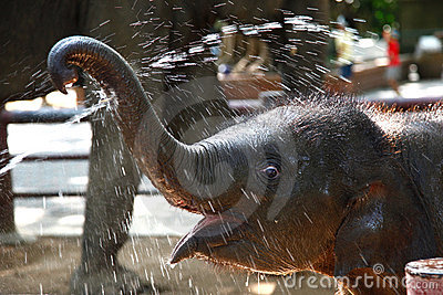Baby elephant enjoy water