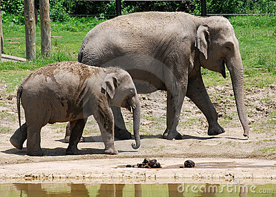 Baby Elephant and his Mom at the Zoo
