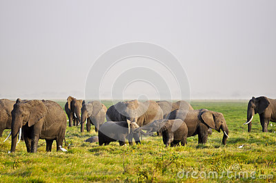 Baby elephants playing