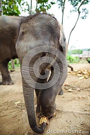 Baby elephants standing