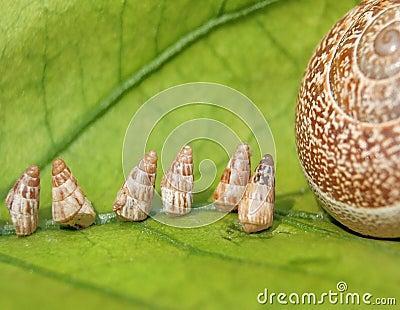 Baby Garden Snails going home