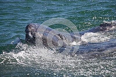 Baby Gary whale