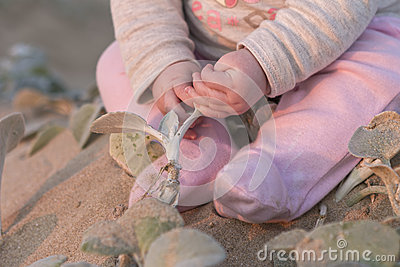 Baby girl on beach touching plants