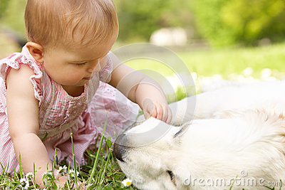 Baby Girl In Summer Dress Sitting In Field