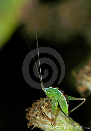 Baby grasshopper takes a bow