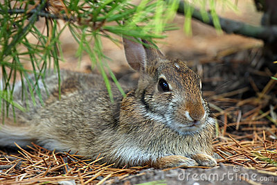 Baby Hare