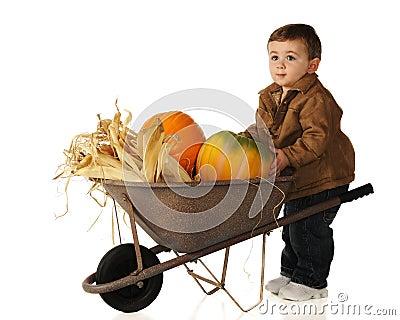 Baby Harvest