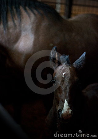 Free Baby Horse Stock Photos - 14078313