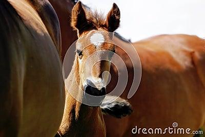 Baby Horse Peeking