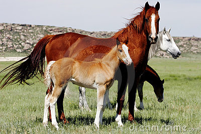 Baby Horses with Mothers
